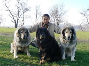 tibetan2.jpg